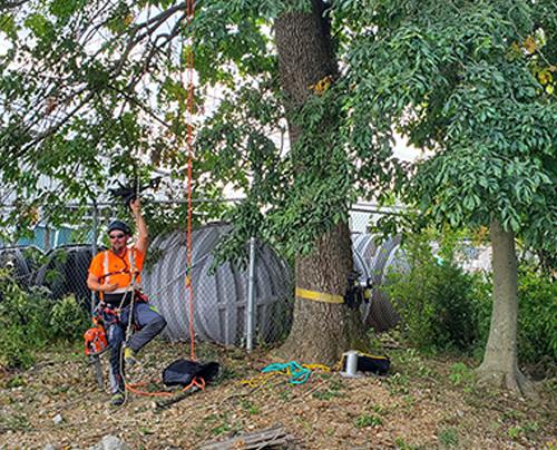 Arbor Training